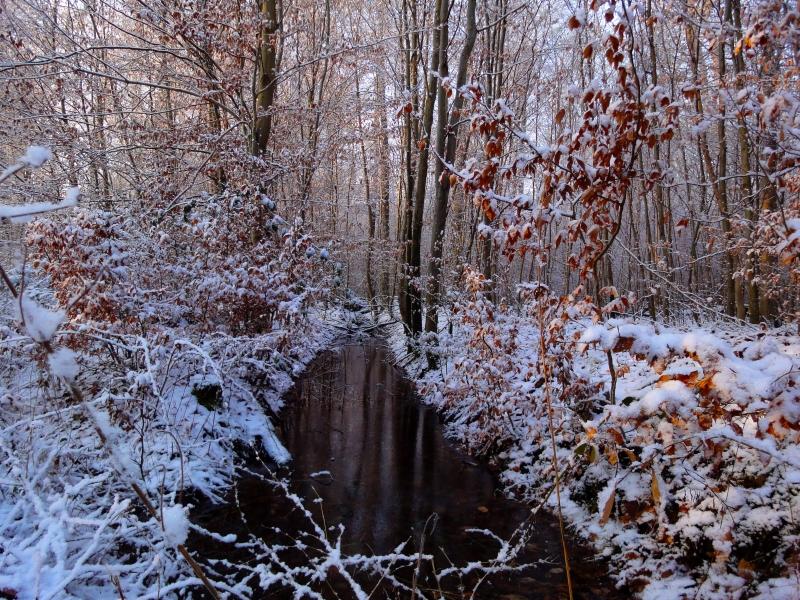 Dieburger Forst