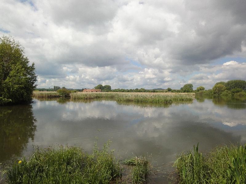 Reinheiimer Teich