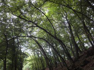 Wäller Trail