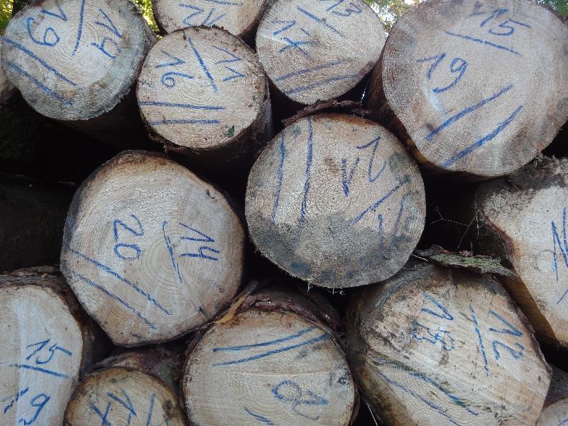 Holzhauptsaison