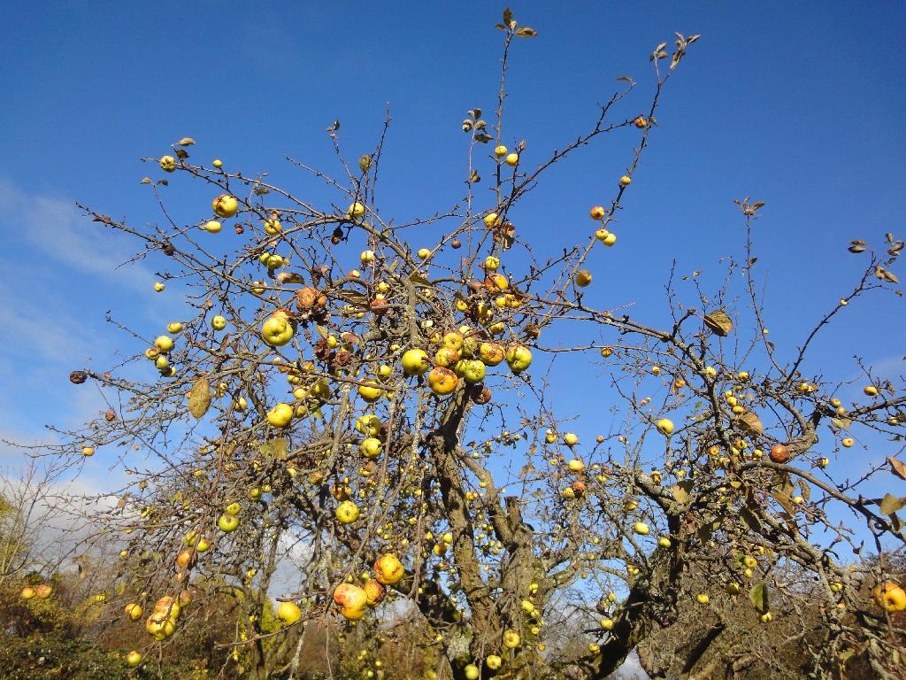 Äppler-Allee