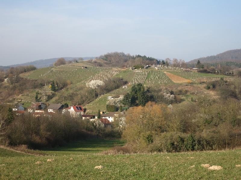 Weinberge oberhalb von Gronau