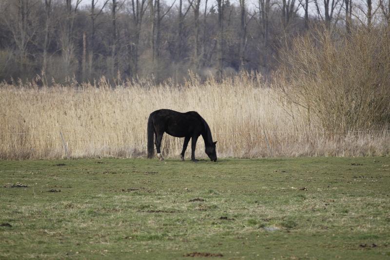Pferdekoppel an der Gersprenz