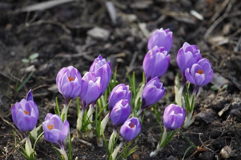 Frühlimgsboten
