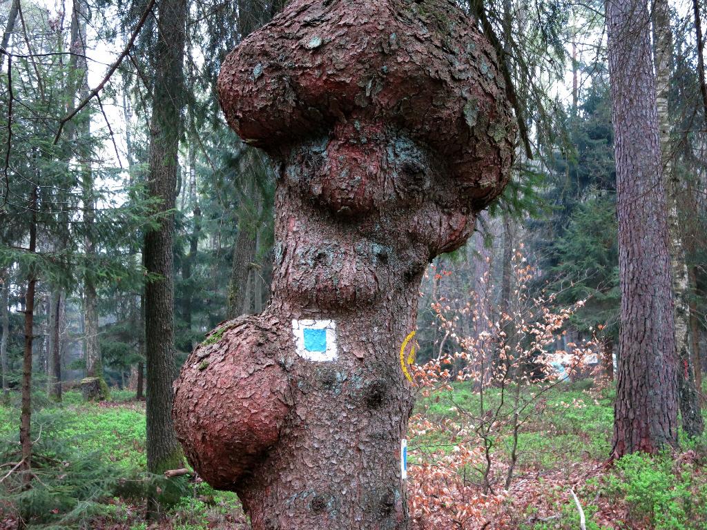 Naturkunstwerk