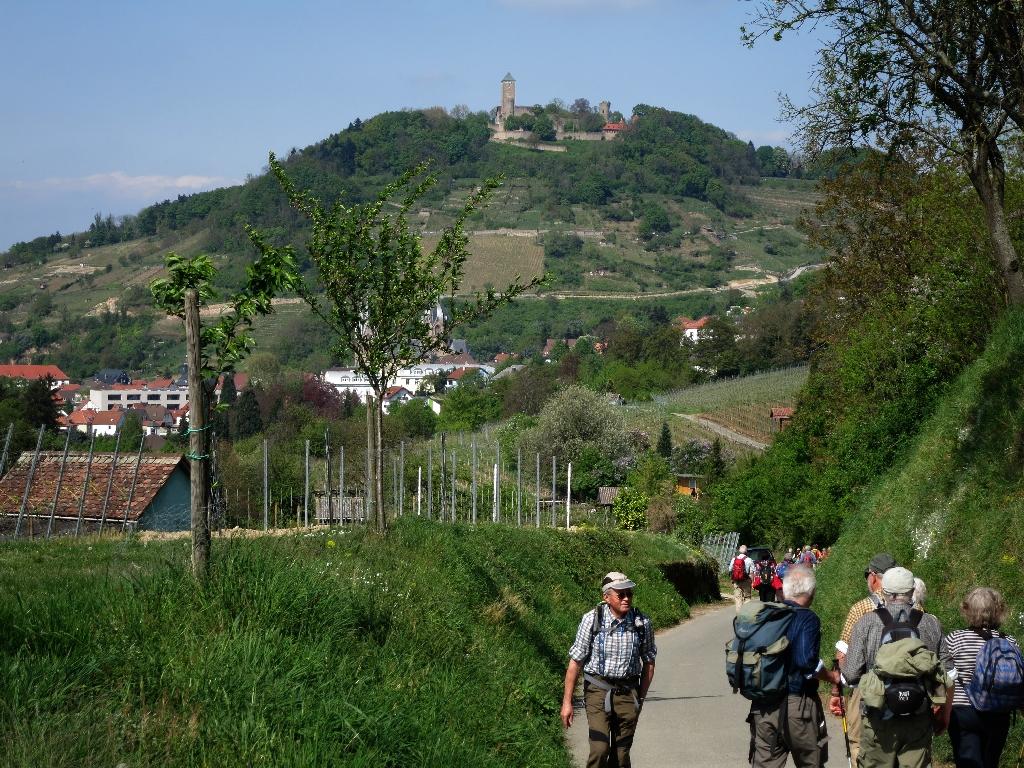 Blick auf die Starkenburg: Wanderparadies Bergstraße