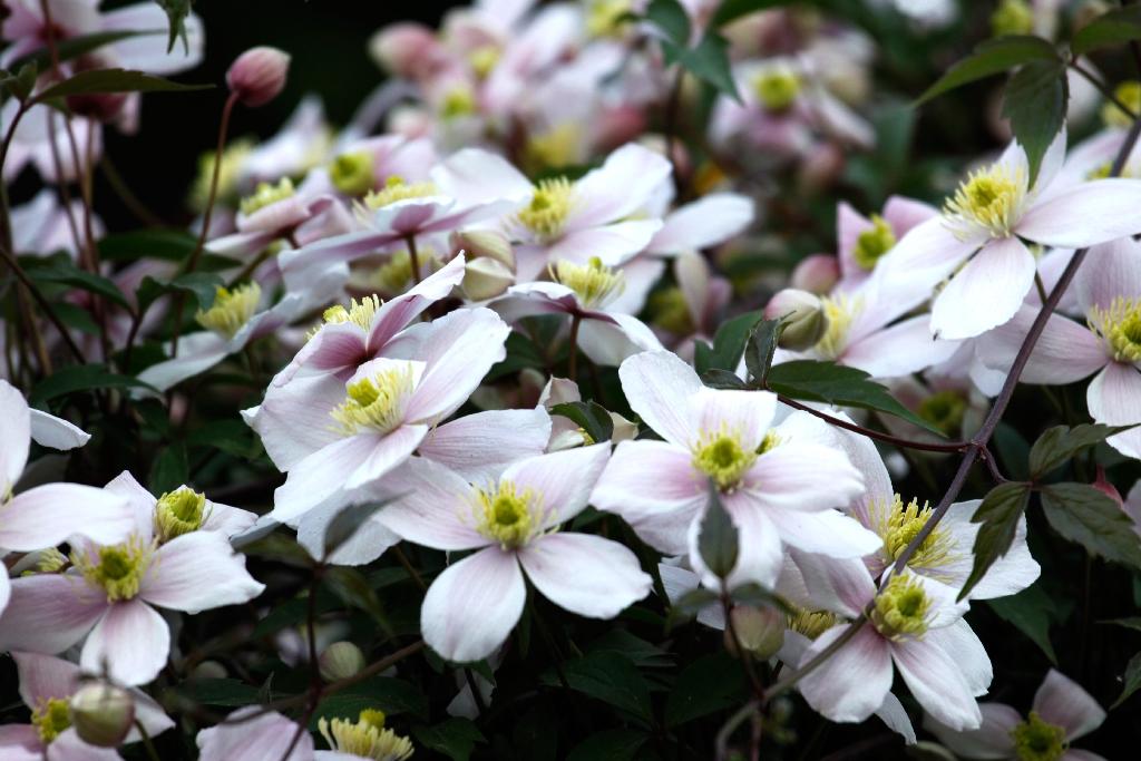 Blüten Blüten Blüten