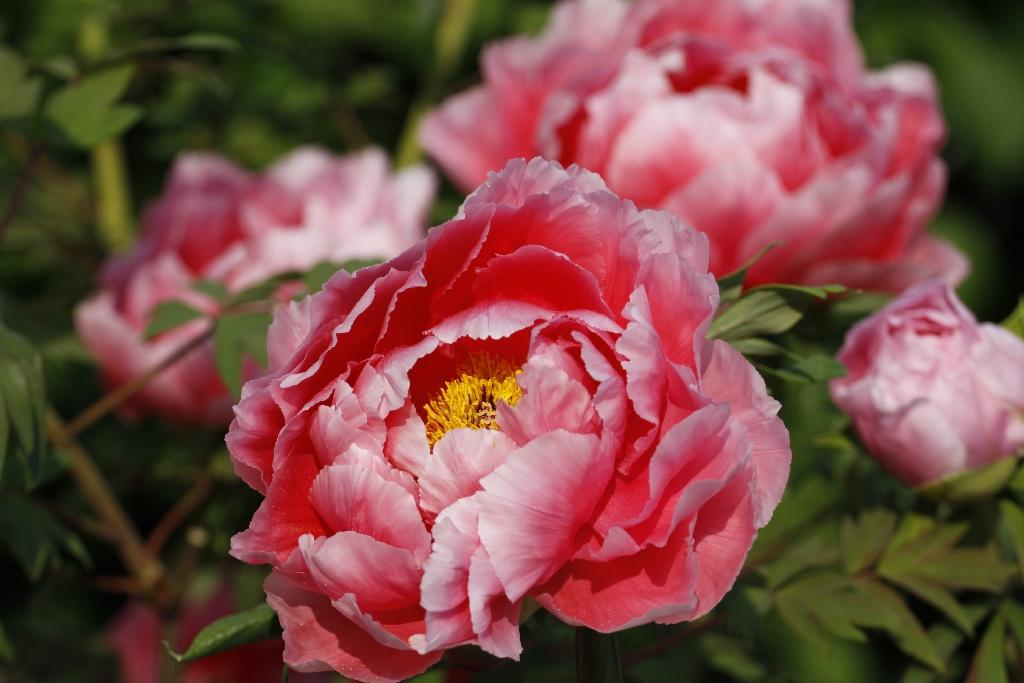 Blütenpracht im April