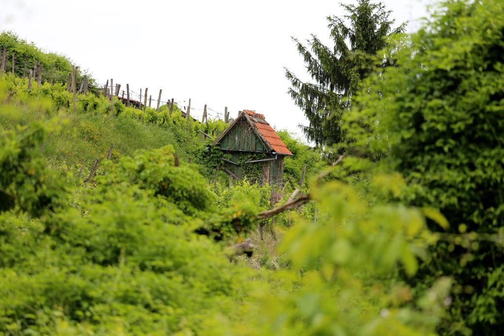 BurgensteigT2_94