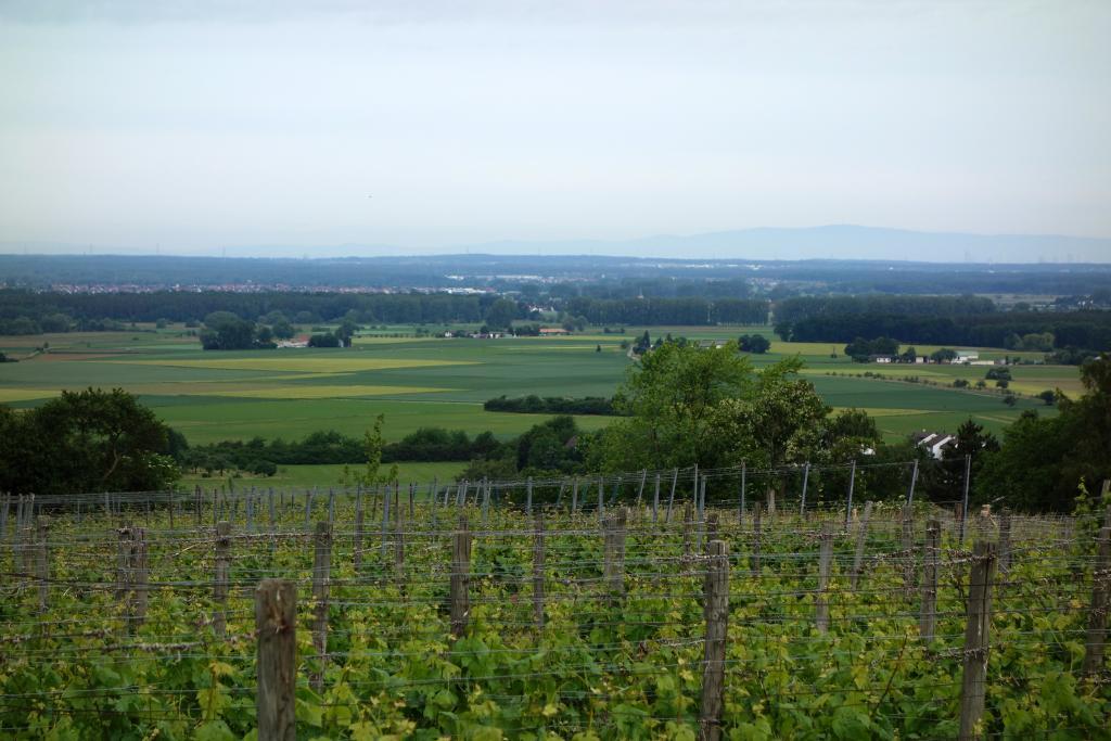 Weinlagenwanderung Gross Umstadt_11