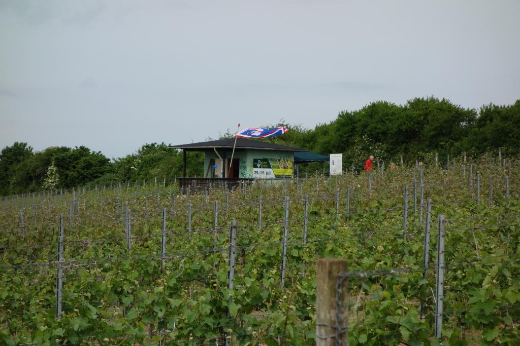 Weinlagenwanderung Gross Umstadt_15