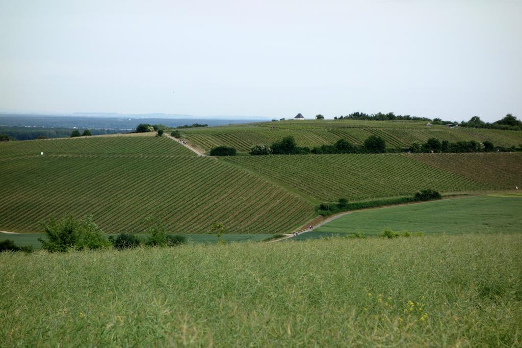 Weinlagenwanderung Gross Umstadt_16