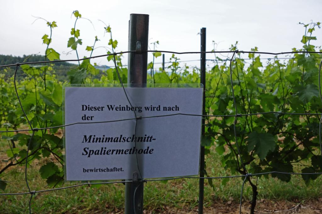 Weinlagenwanderung Gross Umstadt_18