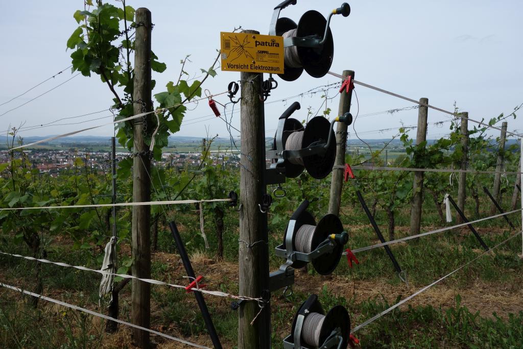 Weinlagenwanderung Gross Umstadt_20