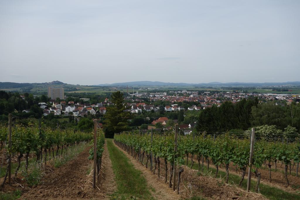 Weinlagenwanderung Gross Umstadt_23