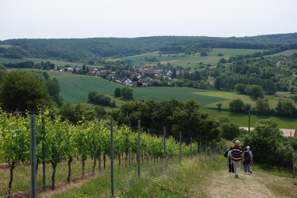 Weinlagenwanderung Gross Umstadt_25