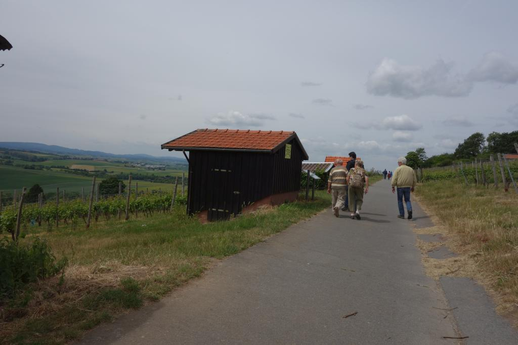 Weinlagenwanderung Gross Umstadt_35