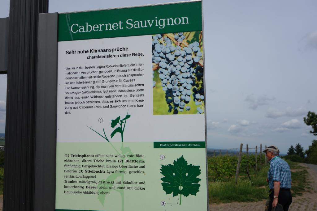 Weinlagenwanderung Gross Umstadt_37