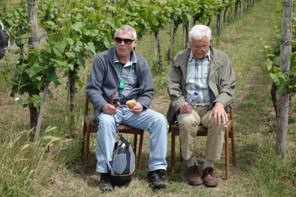 Weinlagenwanderung Gross Umstadt_39