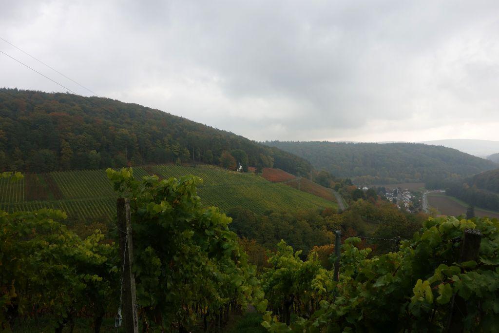 RotweinwanderwegI_28