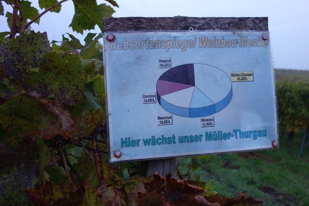 RotweinwanderwegI_4