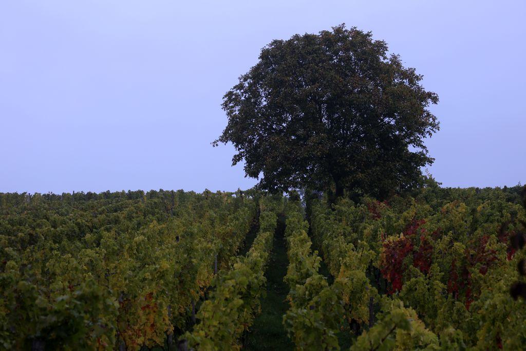 RotweinwanderwegI_43