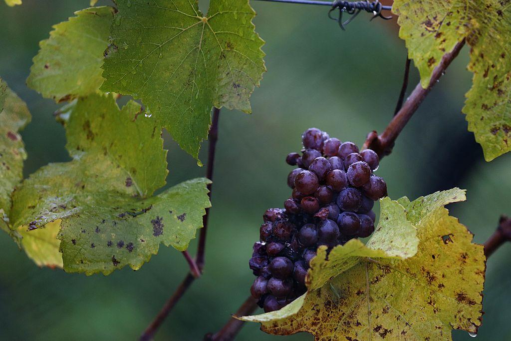 RotweinwanderwegI_46