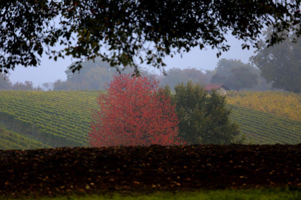 RotweinwanderwegI_48