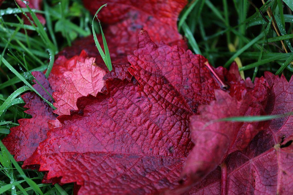 RotweinwanderwegI_62