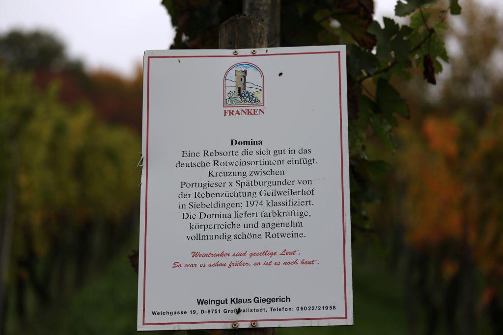 RotweinwanderwegI_68