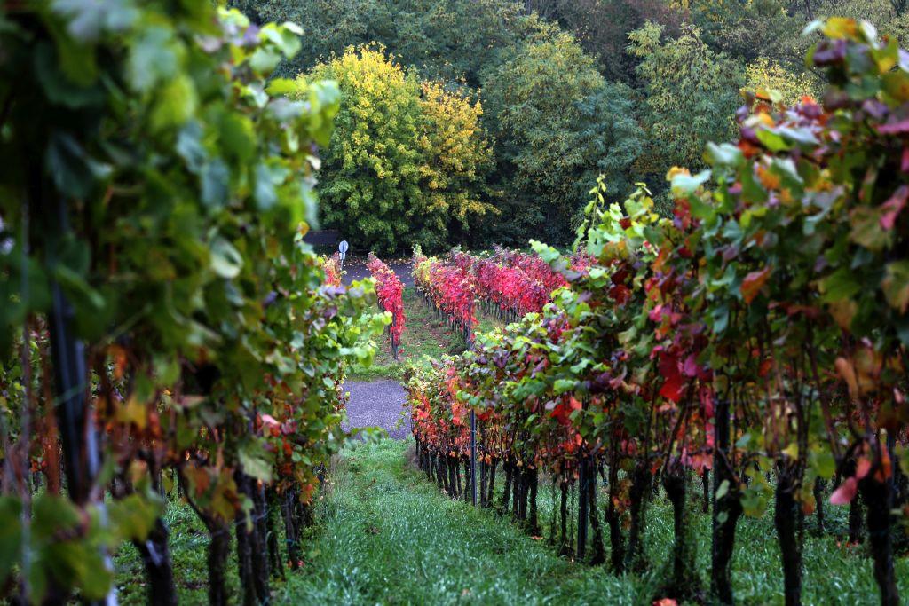 RotweinwanderwegI_73