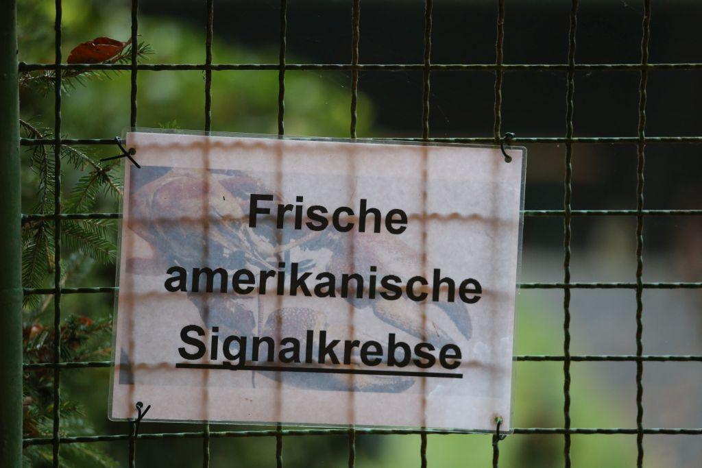 Nibelungenmarathon_29