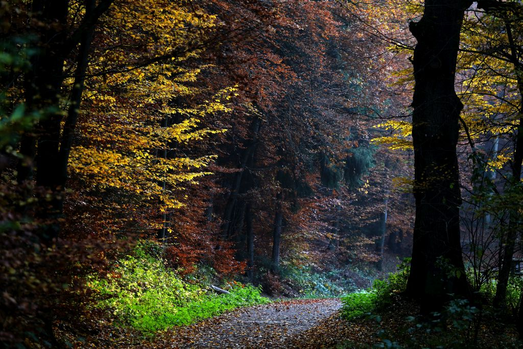 Nibelungenmarathon_30