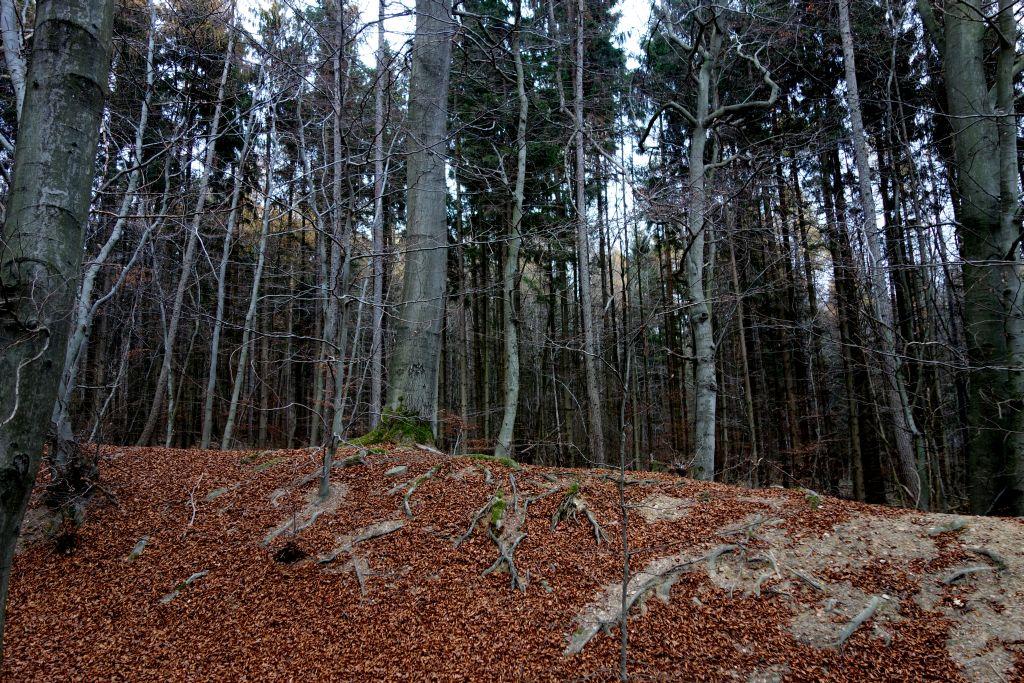 TaunushöhenwegTrail1_16