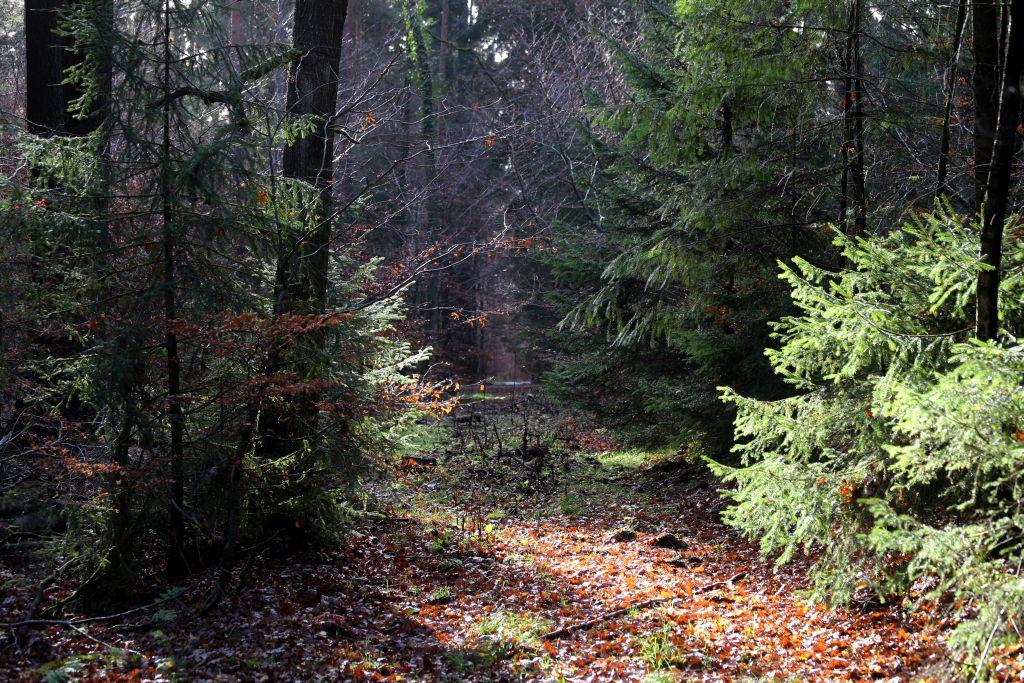TaunushöhenwegTrail1_35