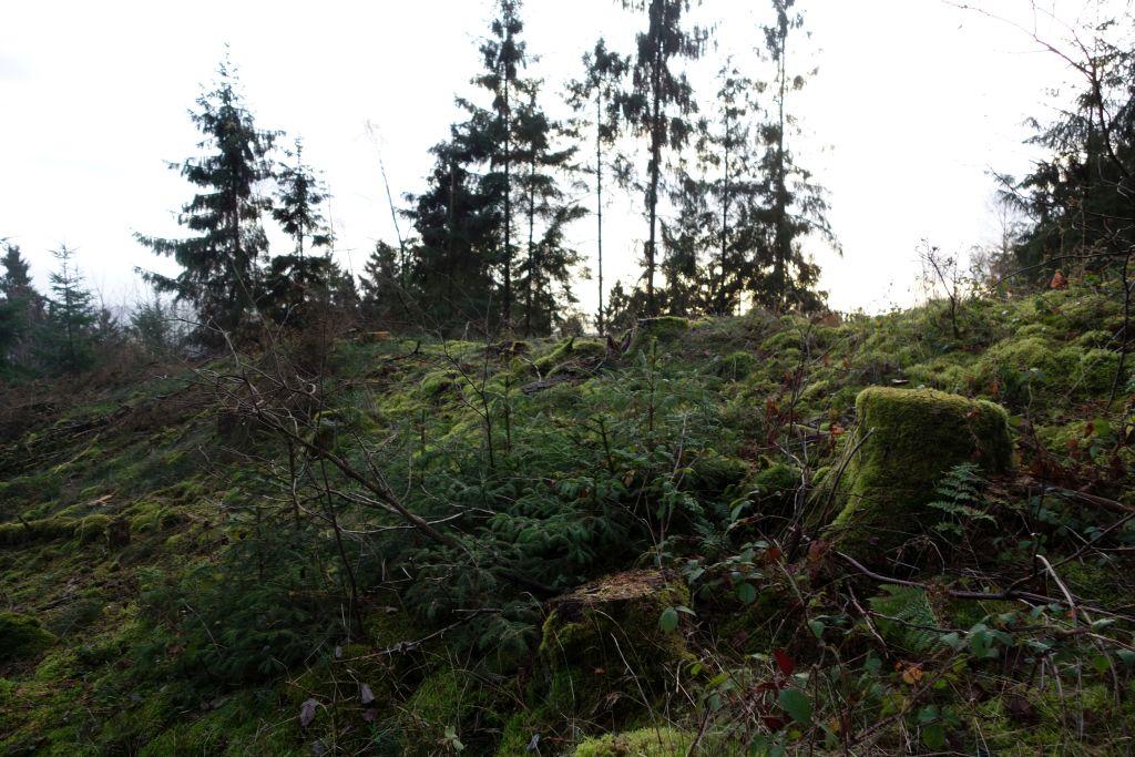 TaunushöhenwegTrail1_6