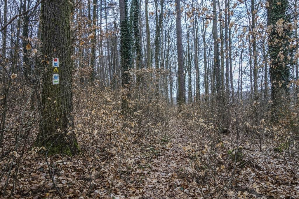 HW19_Trail5_2