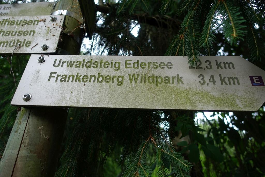 Burgwaldpfad__33