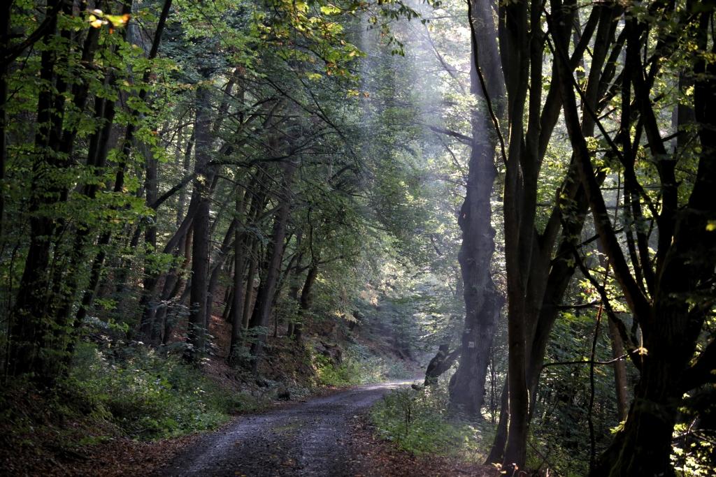 lahnwanderweg-trail-4__56
