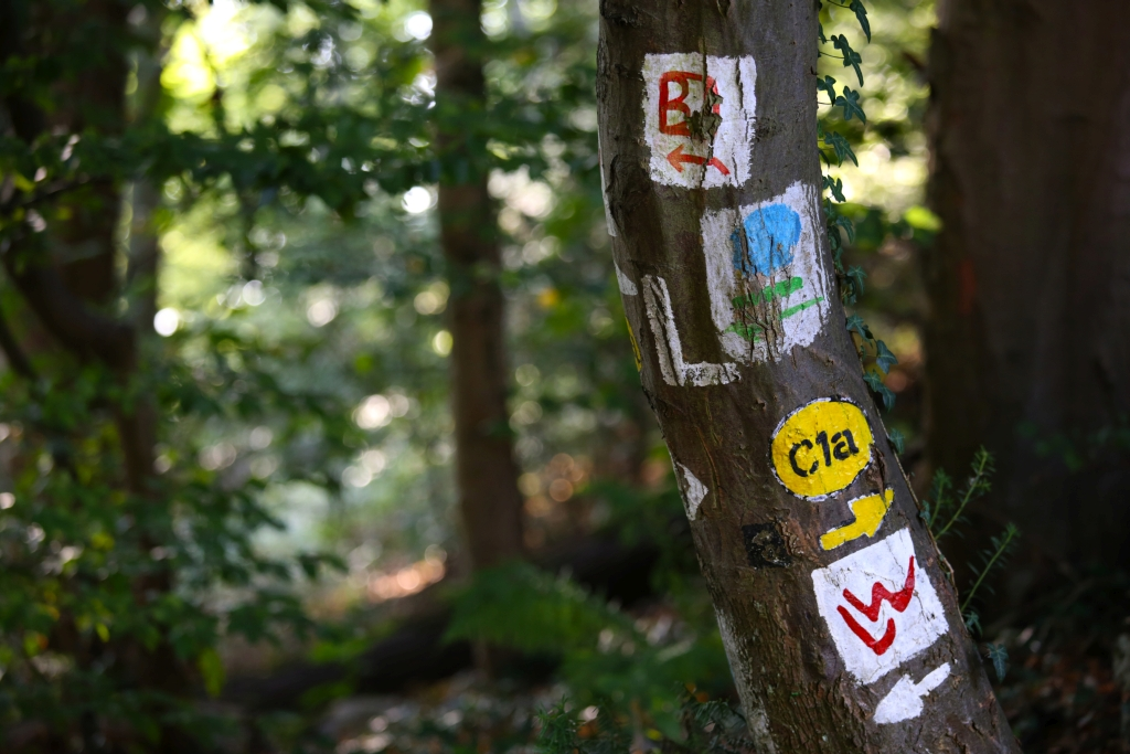 lahnwanderweg_trail3__65
