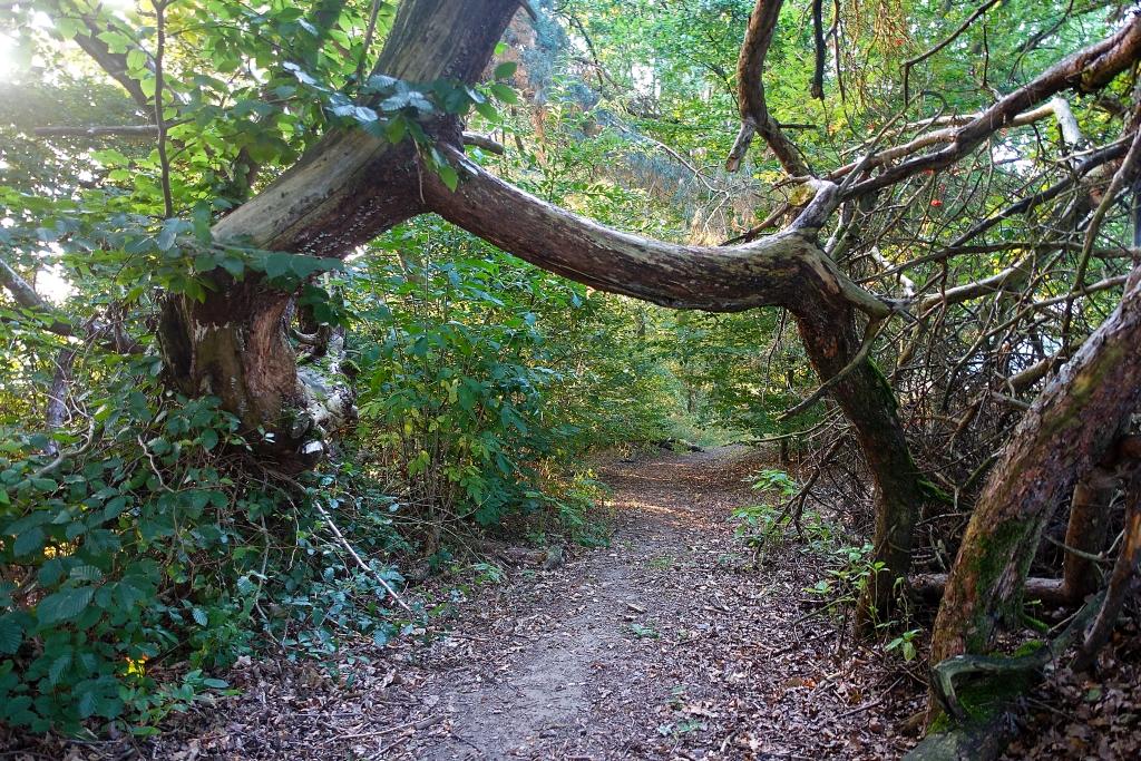 lahnwanderweg_trail3__9