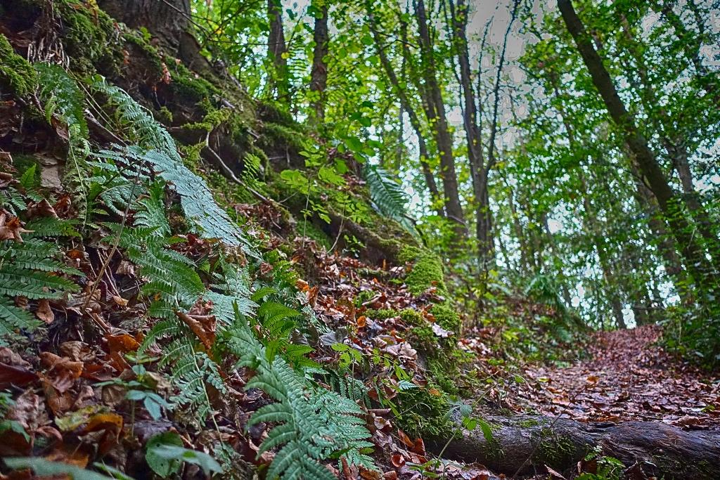 lahnwanderweg-trail5__11