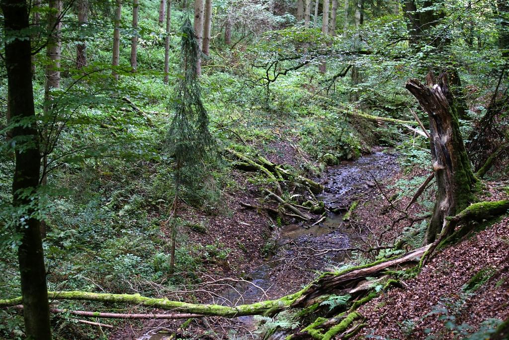 lahnwanderweg-trail5__69
