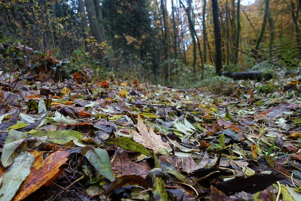lahnwanderweg_trail6_17