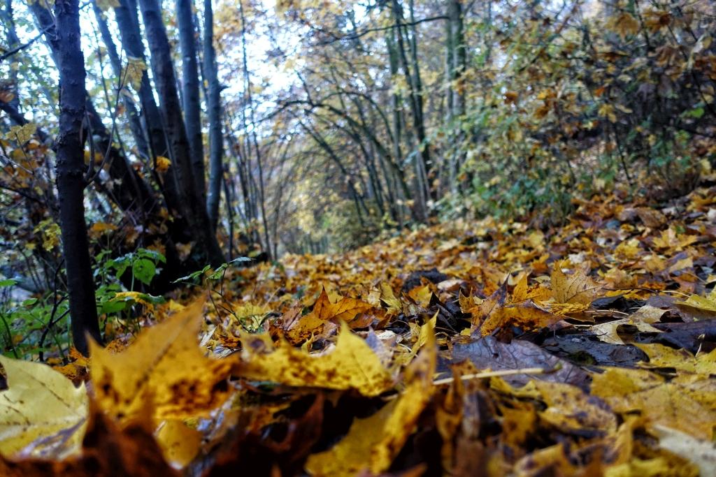 lahnwanderweg_trail6_5