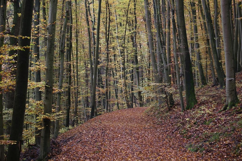 lahnwanderweg_trail6_60