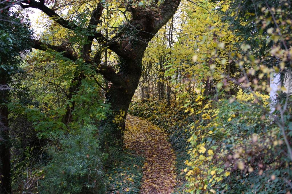 lahnwanderweg_trail6_69