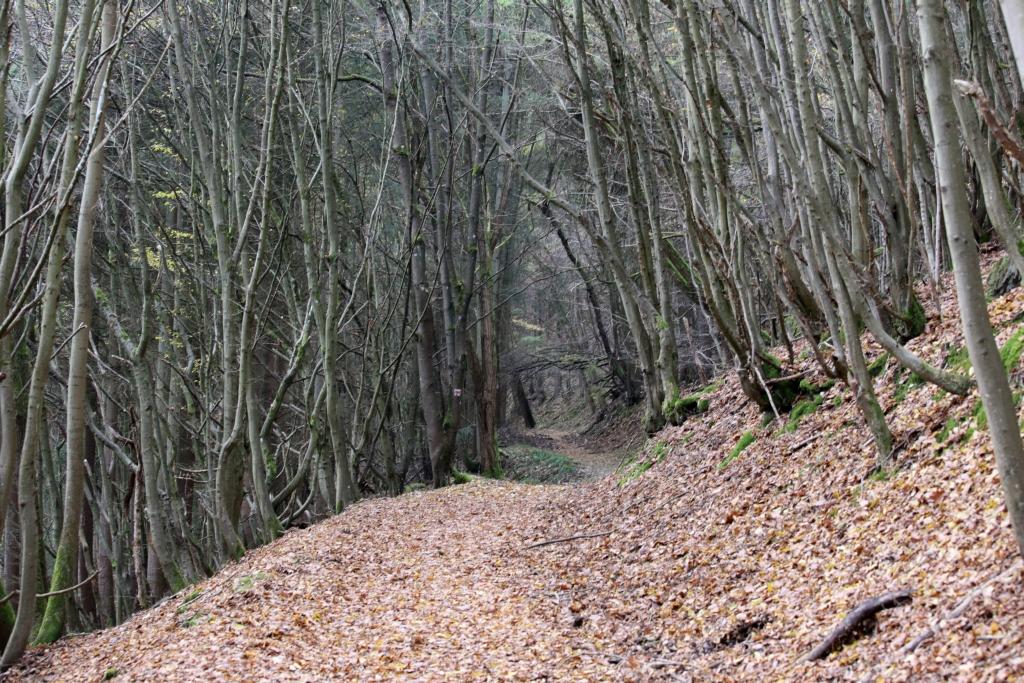 lahnwanderweg_trail7_70