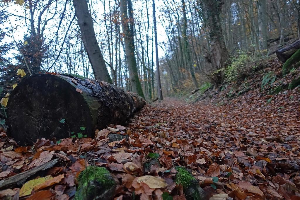 lahnwanderweg_trail8_2