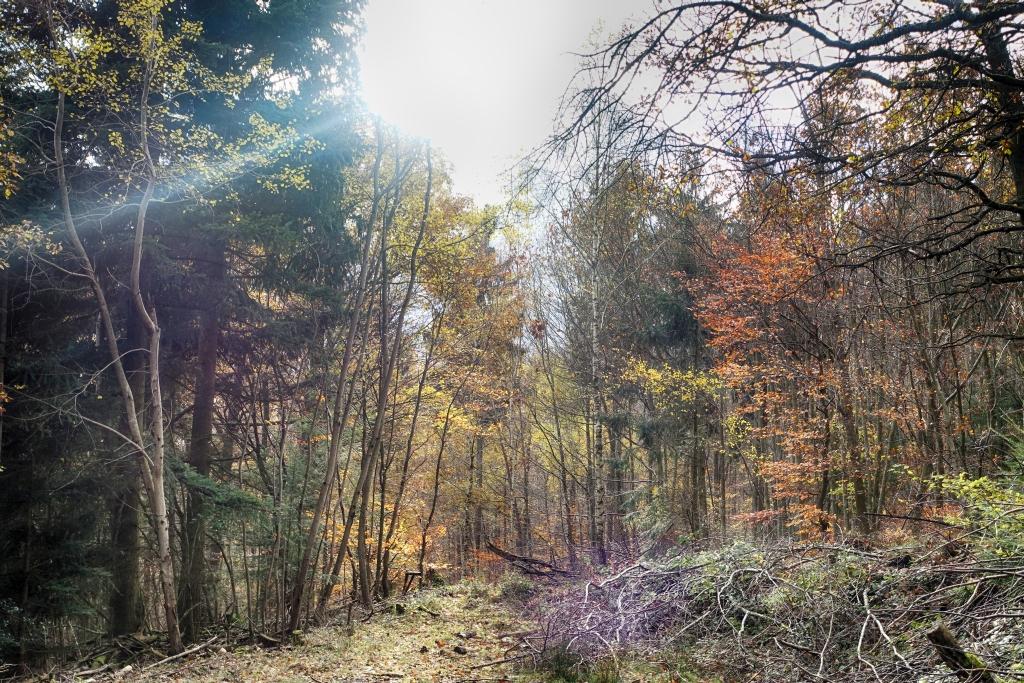 lahnwanderweg_trail8_29